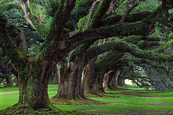 drzewa _lasy